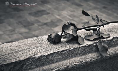rose_mirella prinzivalli